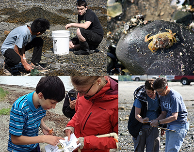 SEANET Student Interns Gather Data on Invasive Green Crabs (Maine UCEDD)
